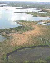Photo of a mangrove fringe